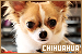 Dogs: Chihuahua: